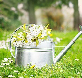 Neubepflanzung · Grabpflege · Hangbefestigung · Heckenschnitt · Planungsarbeiten